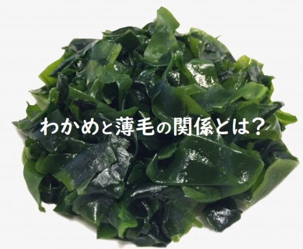 わかめを食べると薄毛が治るのか?【海藻類の育毛発毛効果はある?】